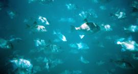 gofishingworld
