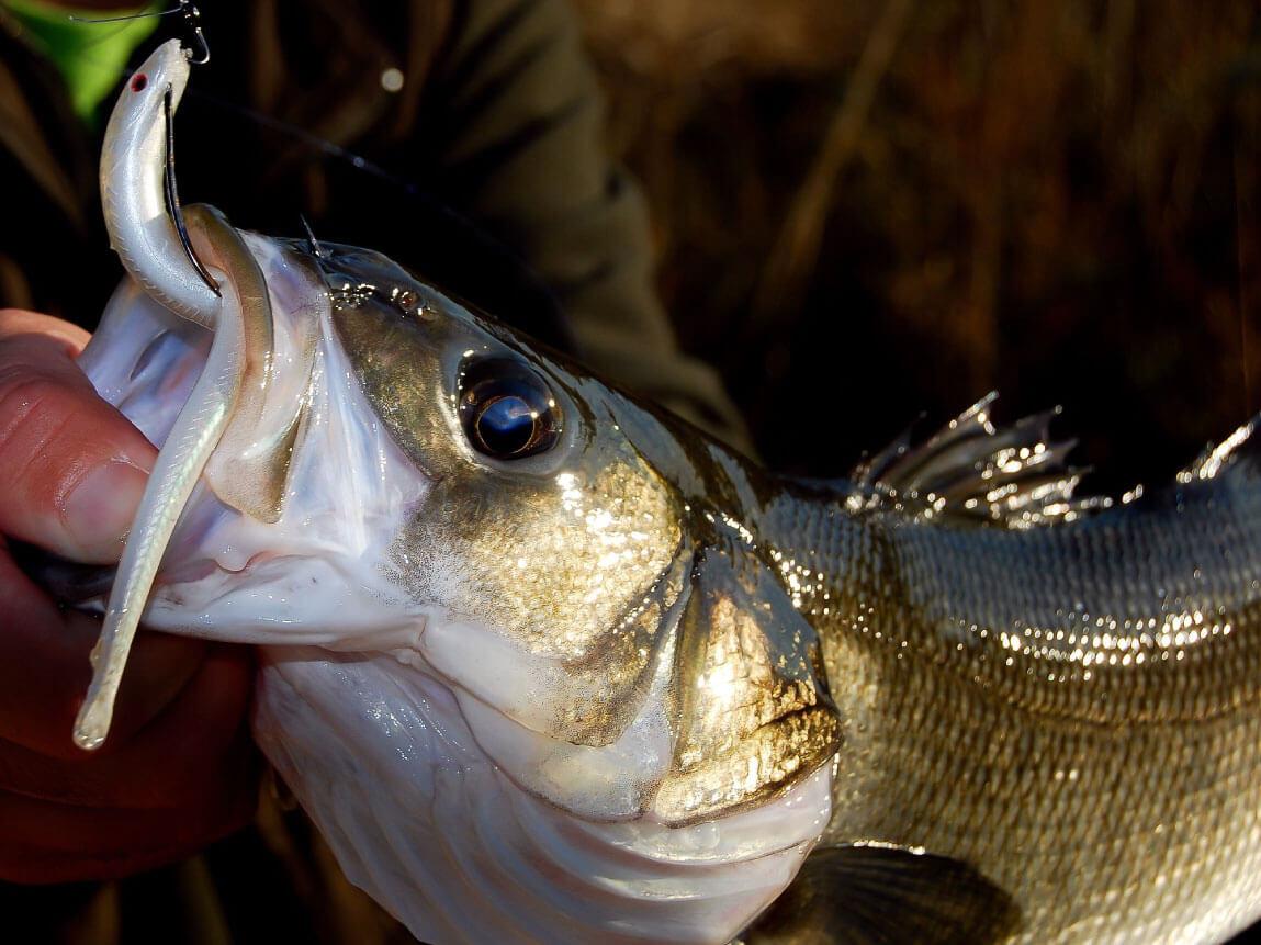Go Fishing Raul Gil