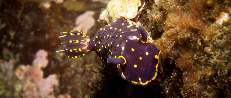 Vida marinha Açores