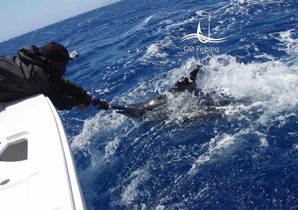 N´Gor Pesca do Marlin