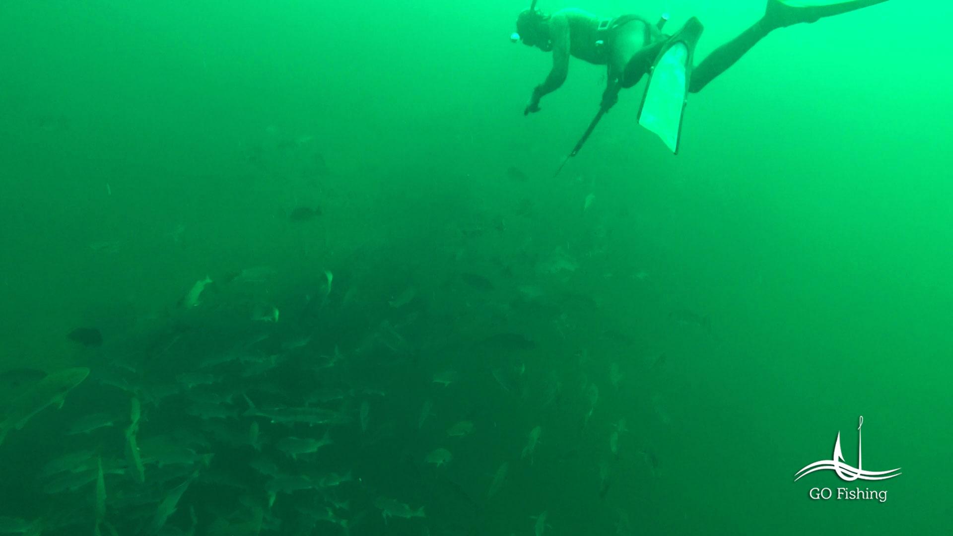 N´Gor Pesca Submarina