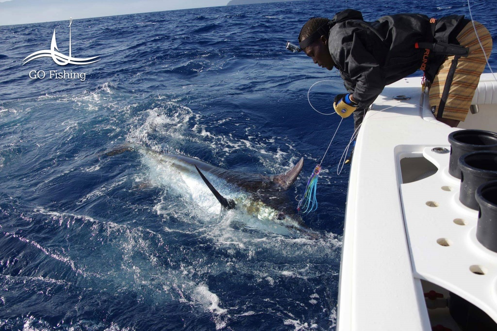 N´Gor, Pesca de peixe Marlin