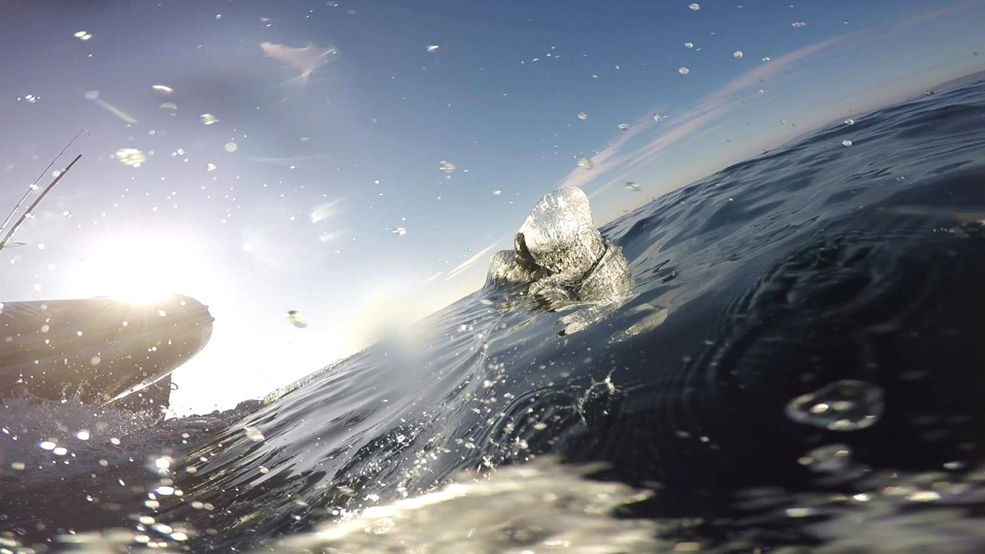 golfinho, dolphin, fishing travel, saídas de pesca, avistamento de golfinhos, catering, amizade,